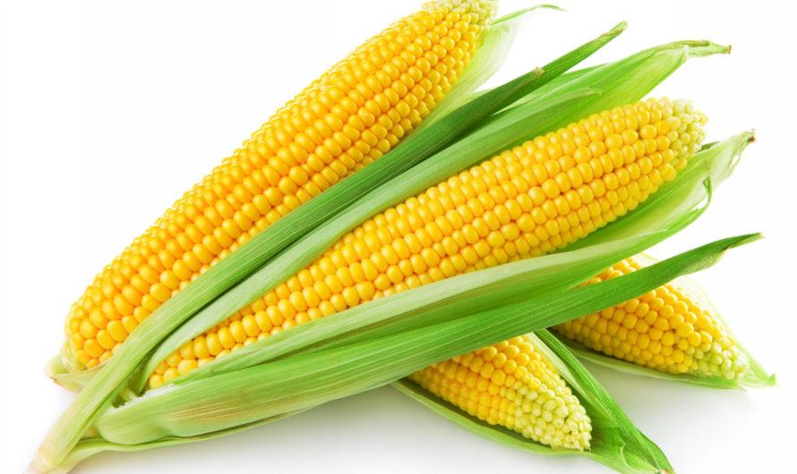 Как правильно варить кукурузу?